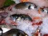 Assaggi di Teatro: il pesce de La Rosetta