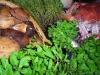 Assaggi di Teatro: funghi porcini e profumi a La Rosetta
