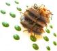 Assaggi di Teatro: Millefoglie di verdure e pesce bandiera con pois di salsa di piselli