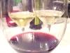Assaggi di vini: Cannonau, Albithia e Alba Nora Feudi della Medusa