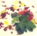 Assaggi di Teatro: Crema di mozzarella, pomodoro confit, prezzemolo e polvere di olive nere