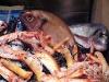 Assaggi di Teatro: pesci e scampi de La Rosetta